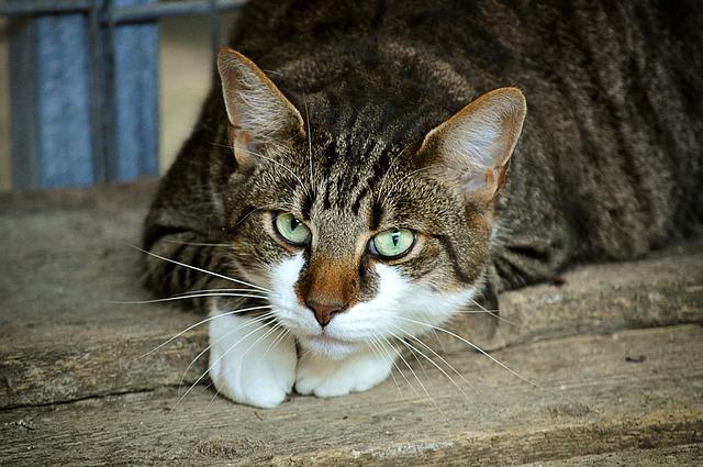 cats-eyes-2671903_640